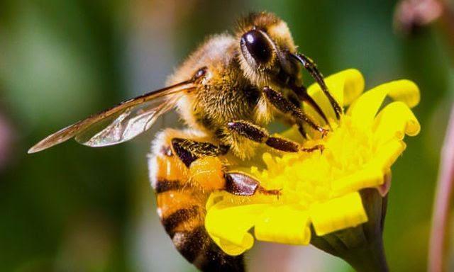 Câu đố về con ong