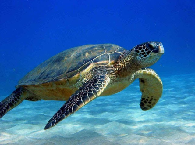 Câu đố về con rùa