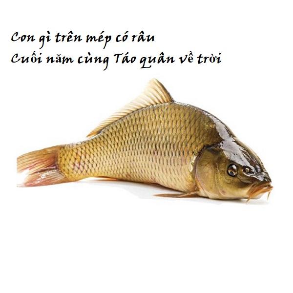 Câu đố về con vật sống dưới nước có đáp án